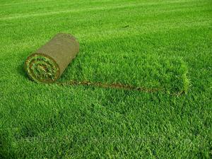 Рулон газонный